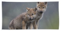 Gray Wolf Canis Lupus Pups In Light Beach Towel