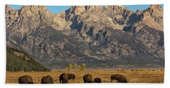 Grazing Under The Tetons Wildlife Art By Kaylyn Franks Beach Sheet