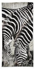 Grazing Zebras Close Up Beach Towel by Darcy Michaelchuk