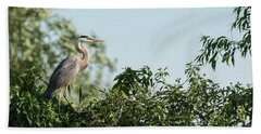 Great Blue Heron  2015-18 Beach Towel by Thomas Young