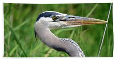 Great Blue Heron Close-up Beach Towel