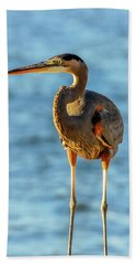Great Blue Heron Closeup Beach Towel