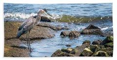 Great Blue Heron Fishing On The Chesapeake Bay Beach Towel