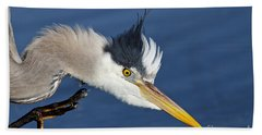 Beach Towel featuring the photograph Great Blue Heron - Good Scratch by Sue Harper