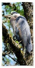 Great Blue Heron In A Tree Beach Sheet