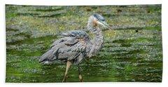 Great Blue Heron In Pond Beach Towel