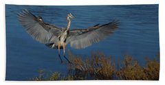 Great Blue Heron Landing Beach Towel by Ernie Echols