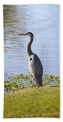 Beach Towel featuring the photograph Great Blue Heron by Phyllis Denton