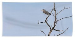 Beach Towel featuring the photograph Great Blue Heron Presentation 2017-1  by Thomas Young
