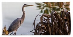 Beach Towel featuring the photograph Great Blue Heron by Randy Bayne