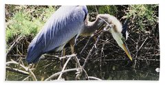 Great Blue Heron Ruffles Its Feathers Beach Towel