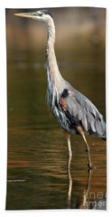 Great Blue Heron Standing Tall Beach Towel
