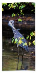 Great Blue Heron With An Itch Beach Towel
