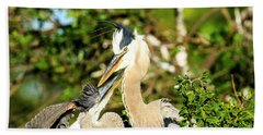 Great Blue Herons Adult With Young Beach Towel