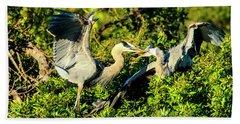Great Blue Herons Battle Beach Sheet