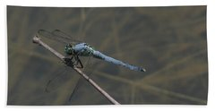 Great Blue Skimmer Dragonfly Beach Towel