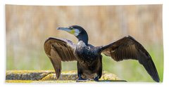 Beach Sheet featuring the photograph Great Cormorant - Phalacrocorax Carbo by Jivko Nakev