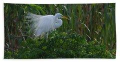 Great Egret Displays Windy Plumage Beach Sheet