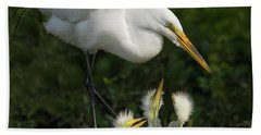 Great Egret With Chicks Beach Towel