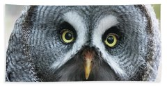 Great Grey Owl Closeup Beach Towel