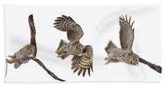 Beach Towel featuring the photograph Great Grey Owl Hunting by Mircea Costina Photography
