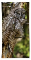 Great Grey Owl In Windy Spring Beach Sheet by Yeates Photography