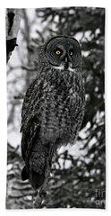 Great Grey Owl Portrait Beach Sheet