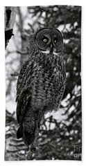 Great Grey Owl Portrait Beach Sheet