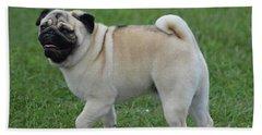 Great Looking Pug Dog On A Leash Beach Sheet