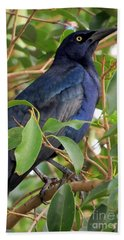 Great-tailed Grackle Beach Towel