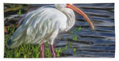 Great White Ibis Beach Towel