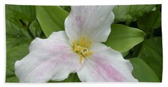 Great White Trillium Beach Sheet