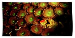 Beach Towel featuring the photograph Green Button Polyps by Anthony Jones
