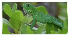 Green Common Iguana In Shrubbery Beach Towel