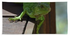 Green Common Iguana On The Edge Of A Bridge Beach Towel