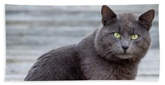 Beach Sheet featuring the photograph Green Eye Stare Cat Square by Terry DeLuco