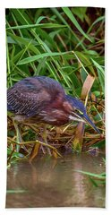 Beach Towel featuring the photograph Green Heron In Costa Rica by John Haldane