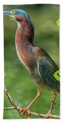 Beach Sheet featuring the photograph Green Heron Pose by Deborah Benoit