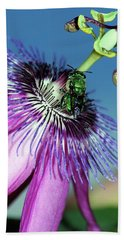 Green Hover Fly On Passion Flower Beach Towel