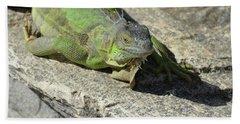 Green Iguana Resting In The Sun Beach Towel by DejaVu Designs