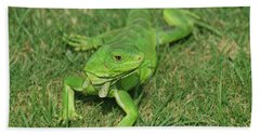 Green Iguana Stretched Out In Grass Beach Towel by DejaVu Designs