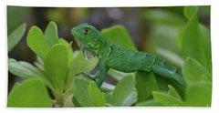 Green Iguana Walking On The Tops Of A Shrub Beach Towel by DejaVu Designs