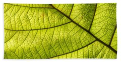 Green Leaf Closeup Beach Towel