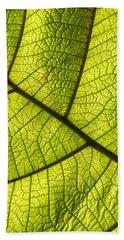 Beach Sheet featuring the photograph Green Leaf Closeup by Matthias Hauser