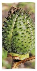 Beach Towel featuring the photograph Green Thorn Apple by William Selander