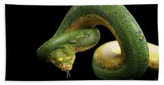 Green Tree Python. Morelia Viridis. Isolated Black Background Beach Sheet by Sergey Taran