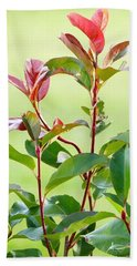Beach Towel featuring the photograph Greenery And Red by Ivana Westin