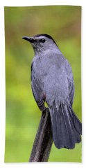 Beach Towel featuring the photograph Grey Catbird by Debbie Stahre