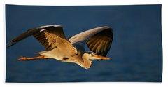 Grey Heron In Flight Beach Towel