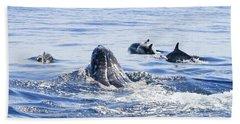 Grey Whale 1 Beach Towel